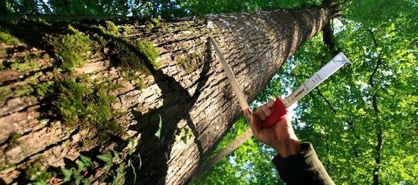 La gestion forestière durable