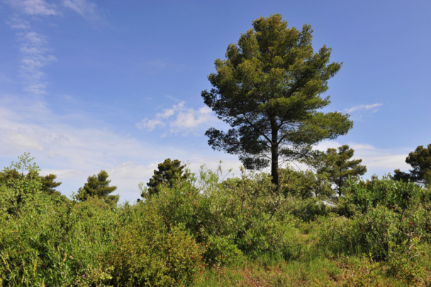 Les propriétaires forestiers