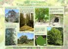 Participez à l'inventaire des Arbres Remarquables de Corse!