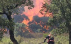 Le risque incendie en forêt corse