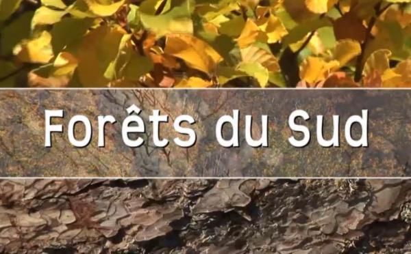 La forêt à l'honneur sur France 3 Via Stella
